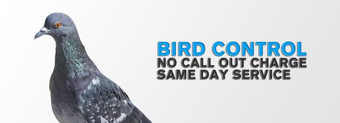 birds pest control